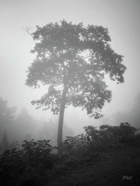 Photograph - Lone Tree And Fog Bw by David Gordon