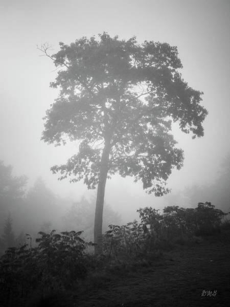 Photograph - Lone Tree And Fog Bw by David Gordon