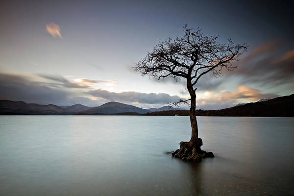 The Trossachs Wall Art - Photograph - Lone Tree At Loch Lomond After Sunset by Gareth Paxton