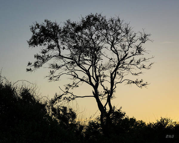 Photograph - Lone Tree At Sunset Color by David Gordon