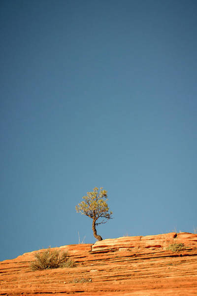 Photograph - Lone Tree Big Sky by Adam Romanowicz