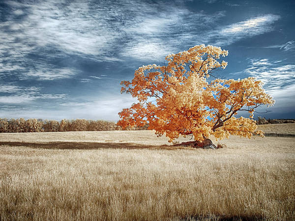 Photograph - Lone Tree by Dan Urban