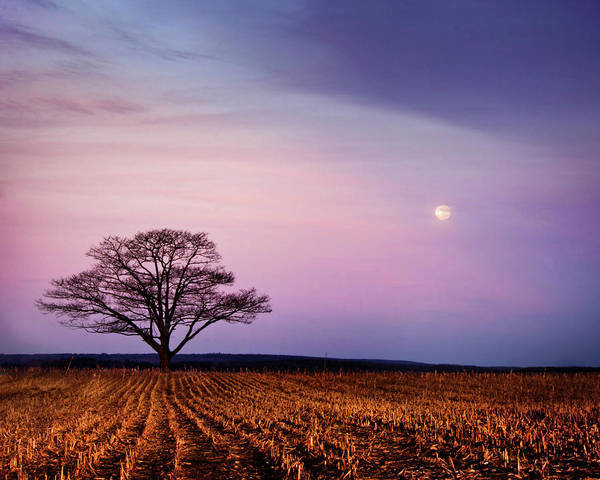 Wall Art - Photograph - Lone Tree, Field And Moon by Nancy Rose