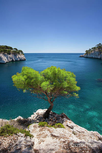 Photograph - Lone Tree - Les Calanques by Brian Jannsen