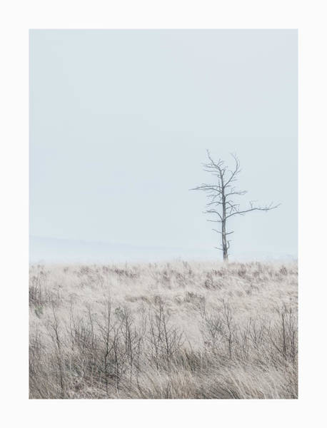 District Wall Art - Photograph - Lone Tree  by Mark Mc neill