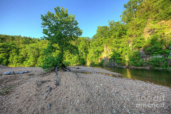 Wall Art - Photograph - Lone Tree On A Gravel Bar by Larry Braun