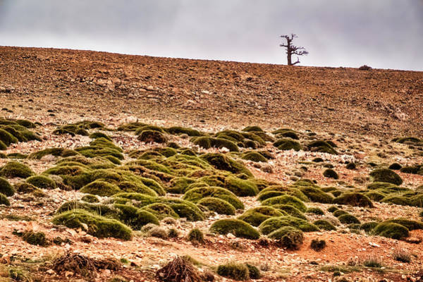Photograph - Lone Tree On The Hill - Morocco by Stuart Litoff