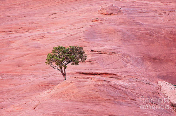 Wall Art - Photograph - Lone Tree On The Red Rocks by Debby Pueschel