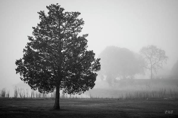 Photograph - Lone Tree Taunton River II Bw by David Gordon