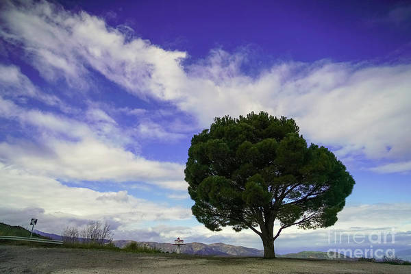 Wall Art - Photograph - Lone Tree With Dramatic Sky. K2 by Vladi Alon