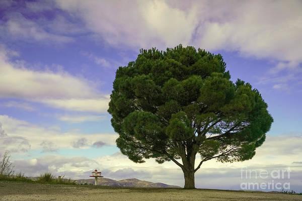 Wall Art - Photograph - Lone Tree With Dramatic Sky.k1 by Vladi Alon