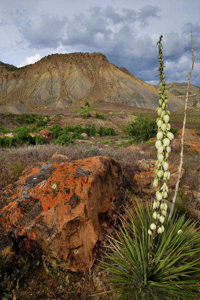 Photograph - Lone Yucca At Book Cliffs by Ray Mathis