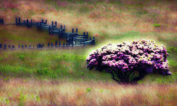 Wall Art - Photograph - Lonely Grassland Fx by Dan Carmichael