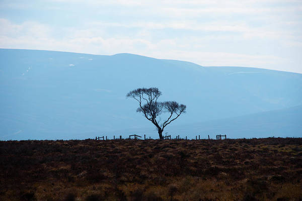 Photograph - Lonely Highland Tree by Bill Cannon