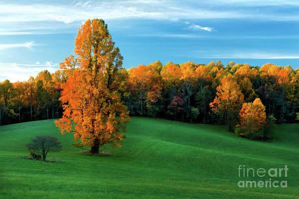 Wall Art - Photograph - Lonely Meadow by Dan Carmichael