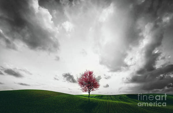 Wall Art - Photograph - Lonely Red Tree On The Green Field. by Michal Bednarek