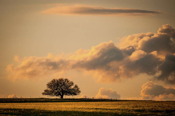 Photograph - Lonely Silhouette by Jeff Phillippi