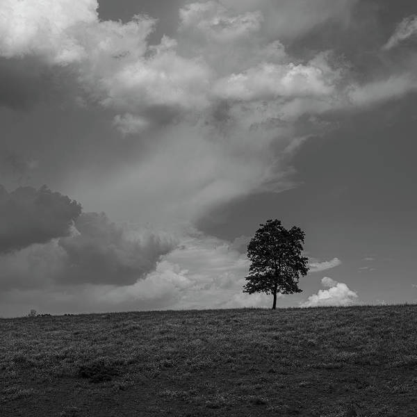 Photograph - Lonely Summer Tree by Patrick M Lynch