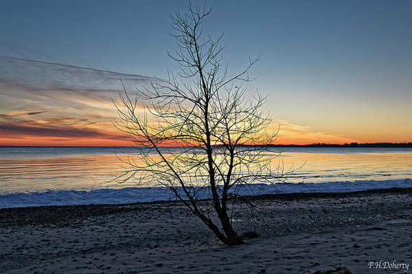 Great Lakes Region Wall Art - Photograph - Lonely Tree At Sunset by Phill Doherty