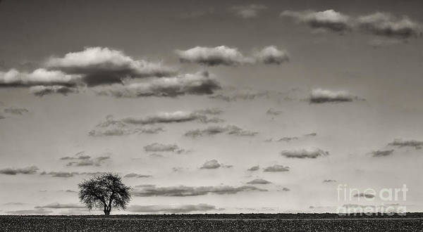 Photograph - Lonely Tree by Bernd Laeschke