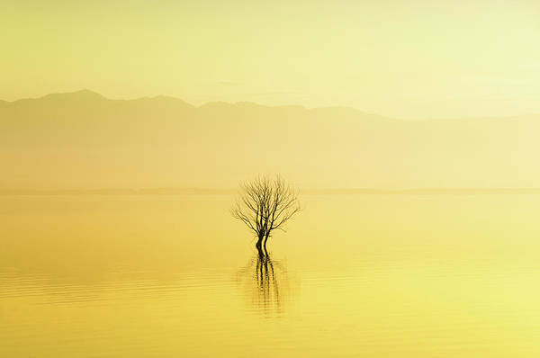 Waters Edge Photograph - Lonely Tree In The Water On Foggy by Aleksandargeorgiev