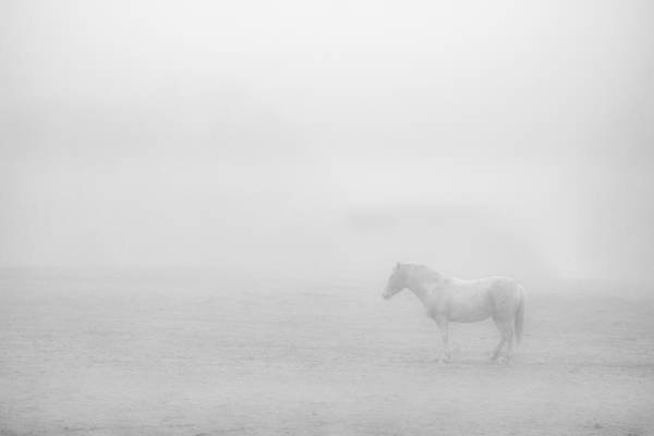 Photograph - Lonesome Horse by Art Shack