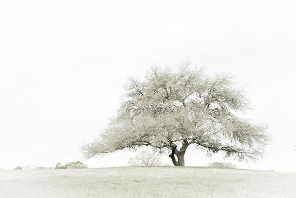Coast Live Oak Photograph - Lonesome Oak by Earleliason