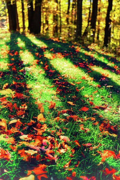 Wall Art - Digital Art - Long Autumn Shadows by Dan Carmichael