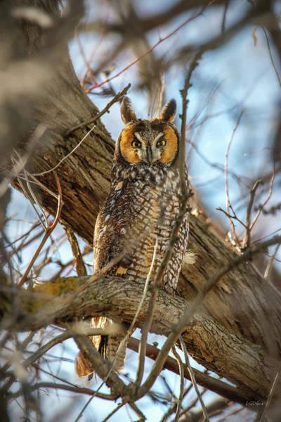Photograph - Long-eared Owl 3 by Leland D Howard