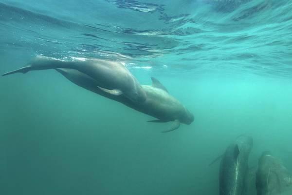 Wall Art - Photograph - Long-finned Pilot Whales by James R.d. Scott