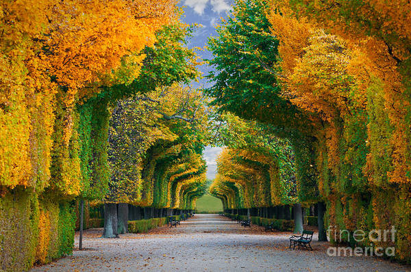 Vibrant Color Wall Art - Photograph - Long Road In Autumn Park by Badahos