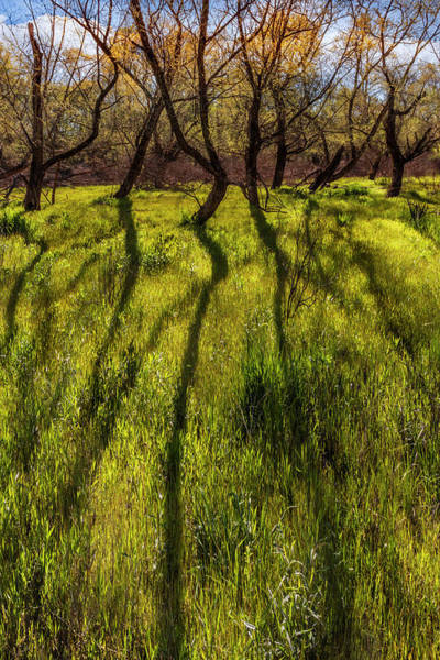 Photograph - Long Shadows In Springtime by Debra and Dave Vanderlaan