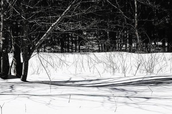 Wall Art - Photograph - Long Shadows by Susan Capuano