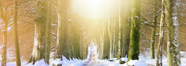 Wall Art - Photograph - Long, Snowy Tree-lined Avenue by Kathy Collins