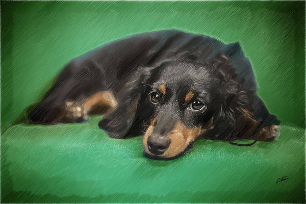 Drawing - Longhair Dachshund - Dwp2561134 by Dean Wittle