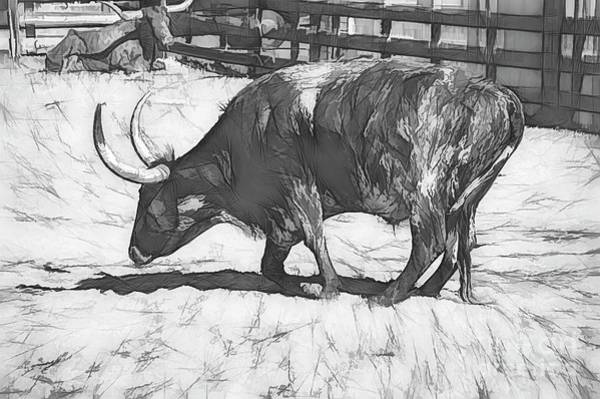Photograph - Longhorn Sketched by Diana Mary Sharpton