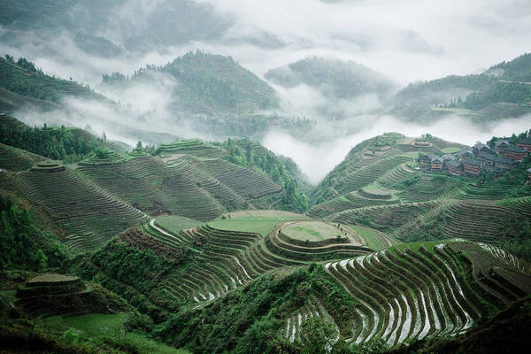Rice Photograph - Longji Rice Terraces by Jowena Chua
