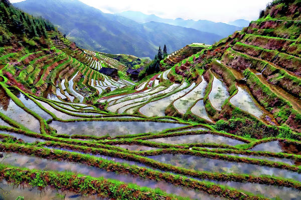 Photograph - Lonji Rice Terraces by Rick Lawler