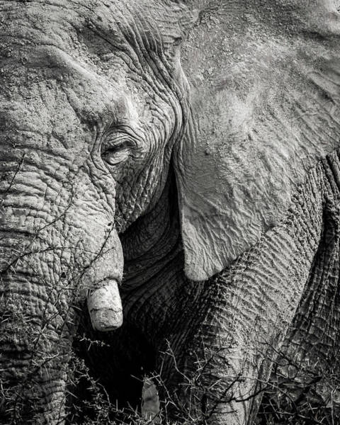 Look Of An Elephant Art Print