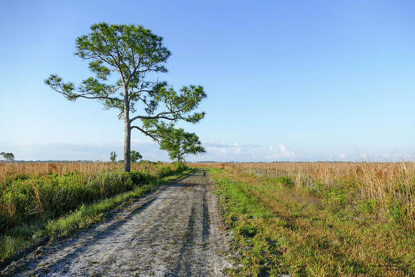 Photograph - Looking Across The Wetlands by Sally Sperry