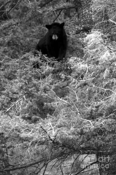 Photograph - Looking Down At The Family Below Black And White by Adam Jewell