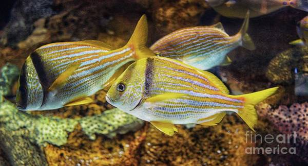 Wall Art - Photograph - Looking For Dory by Arnie Goldstein