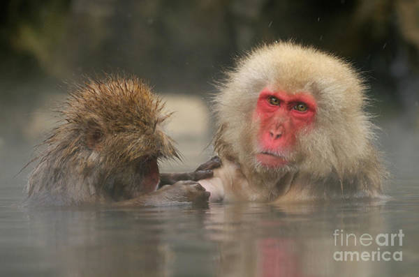 Wall Art - Photograph - Looking For Problems Mate by Harry  Eggens