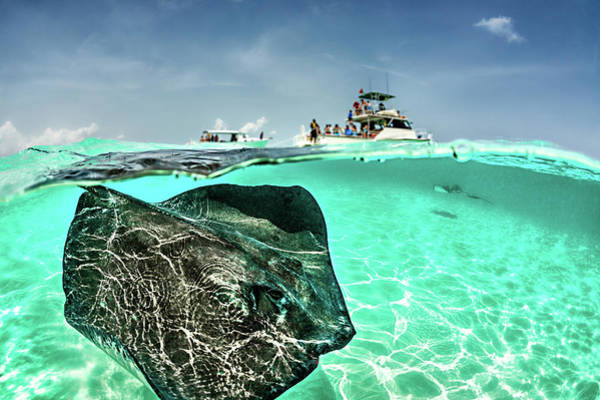 Underwater Diving Photograph - Looking For Stingrays by Extreme-photographer