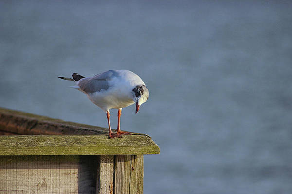 Wall Art - Photograph - Looking For Supper by Martin Newman