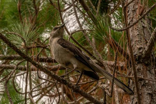 Wildlife Wall Art - Photograph - Looking by Ric Schafer