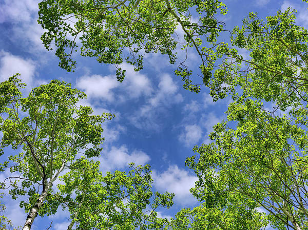 Photograph - Looking Up 14 by Leland D Howard
