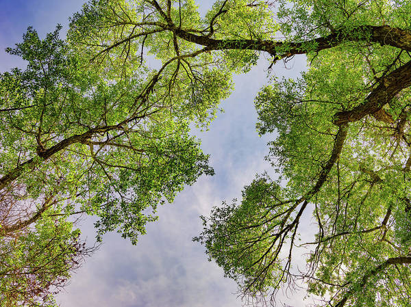 Photograph - Looking Up 2 by Leland D Howard