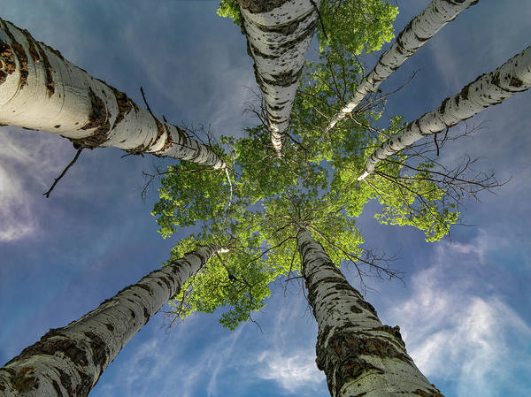 Photograph - Looking Up 4 by Leland D Howard