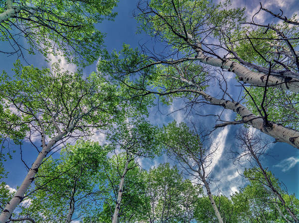 Photograph - Looking Up 6 by Leland D Howard